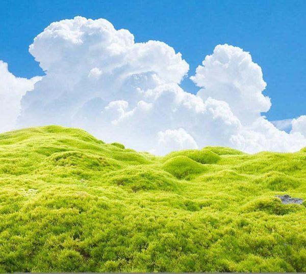 Schöne Landschaft mit Moos
