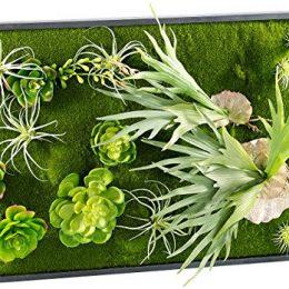 Pflanzenbilder ein st ck natur f r die wohnung gr ne deko besonders - Vertikaler wandgarten ...