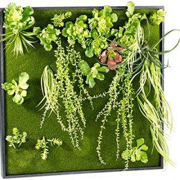 Wandgarten Selber Machen pflanzenbilder ein stück natur für die wohnung grüne deko besonders