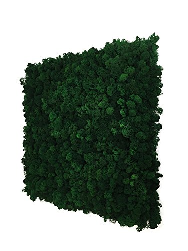 moos wandbild wandverkleidung pflanzenbild moos deko. Black Bedroom Furniture Sets. Home Design Ideas