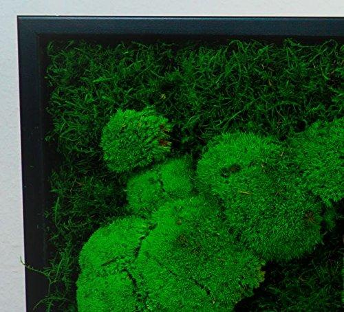 moosbilder moosbild pflanzenbild mit kugelmoos und flachmoos. Black Bedroom Furniture Sets. Home Design Ideas