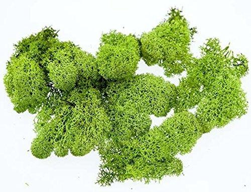 Islandmoos Moos In 1kg 500g 200g Versch Farben Echtes Konserviertes Natur Moos Island Zum Basteln Dekomoos Für Die Deko Zu Ostern