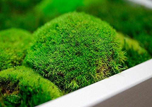 moosbild wandbild mit moos pflanzenbilder wandbilder. Black Bedroom Furniture Sets. Home Design Ideas